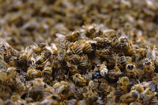 Das Bienensterben verhindern!