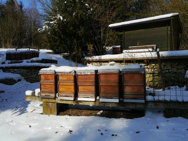 Wie Bienen überwintern
