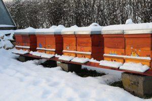 Die Winterkontrolle